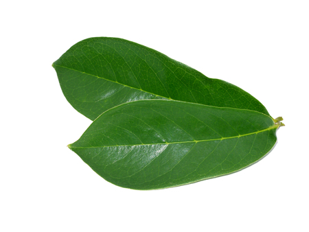 Asian herb - Soursop leaf on white background. (Annona muricata)