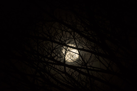 Low key image of Night sky and the moon with branch. Stock Photo