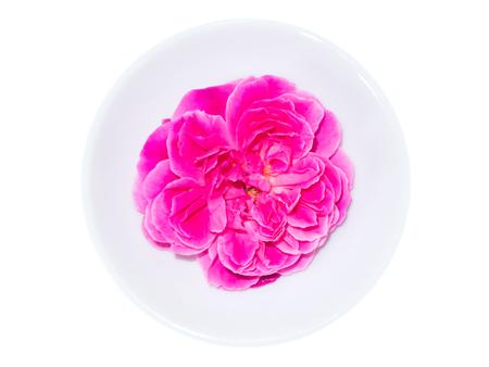 Damask rose petals for rose tea on white background. (Rosa damascena Mill)