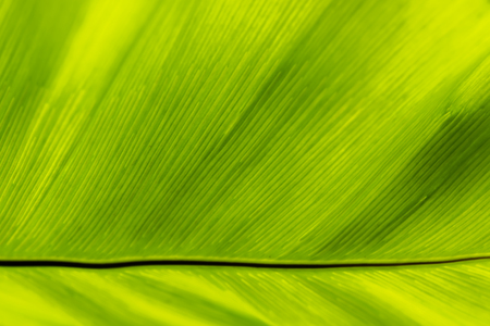texture of fern leaves background.