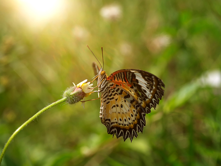 Butterfly on the flower grass. Banque d'images