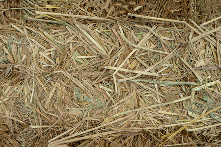 Close up of Dry rice straw to used for animal husbandry.