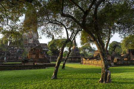 Tree in the old landscape of Ayutthaya Province, Is a tourist attraction in Thailand