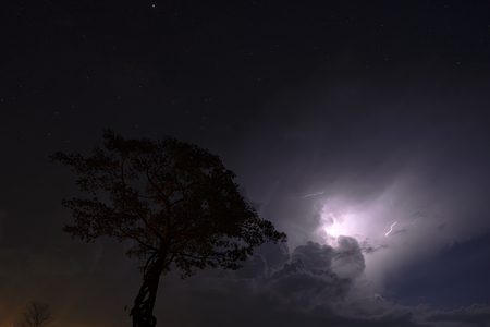 Silhouette tree in the night with rain cloud and lightning cloud background. Stock Photo
