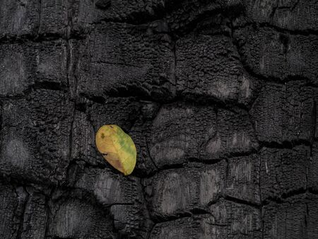 Low key image the Surface of charcoal background with leaf fall.
