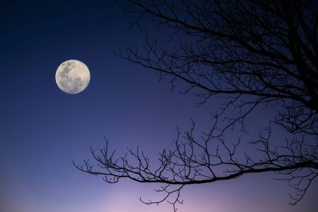 Silhouette of tree branches on twilight sky background with moon