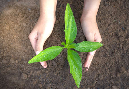 The top view of the hands that dominate the tree seedlings represents natural environmental friendliness.
