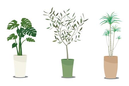 Foliage plants icon. Illusztráció