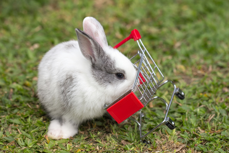 Rabbit with mini model shopping cart toy on green grass. fast and easy shopping online, e-commerce, and business marketing concept. Stock Photo