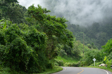 Road Trip on Mountain highway in green forest foggy view. Mountain curve road with fog in rainy day. Travel in Thailand country, road trip to mist mountain concept.