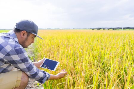 Farmer new generation using tablet computer for research and studying the development of rice field to increase productivity. 写真素材