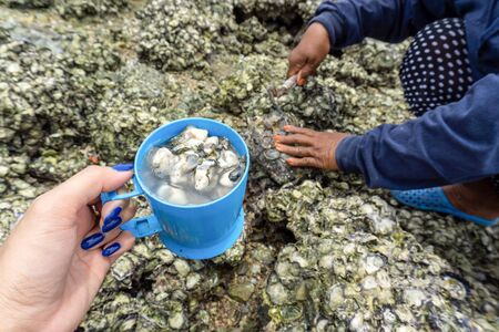 Hands holding cup of open caught sea oysters.