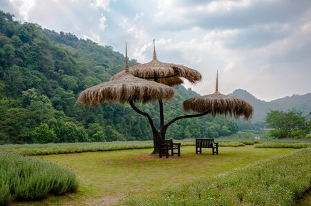 The Grass Umbrella at the Royal Project Garden Northern Thailand photo