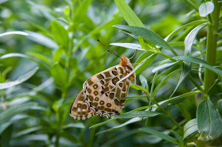 nervation: Close up butterfly on the tree Stock Photo