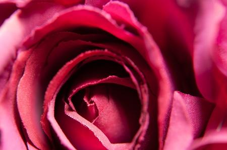 Close up of red handmade fabric rose photo