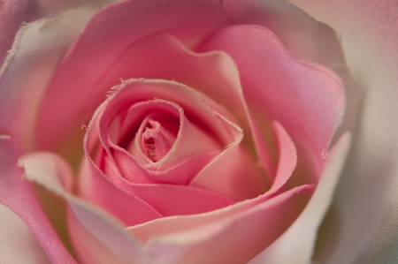 Close up of pink handmade fabric rose photo