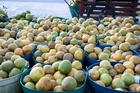 damping: Basket of damping off pomelo from plant diseases on sale