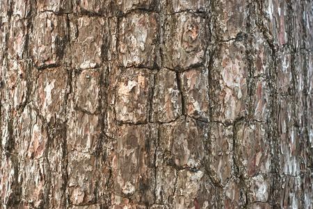 Pattern of pine, Phukradueng National Park, Thailand Stock Photo - 8562556