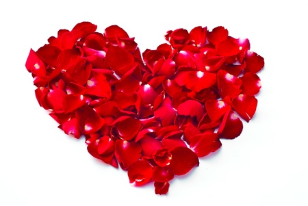 Rose petals are heart shaped. Stock Photo