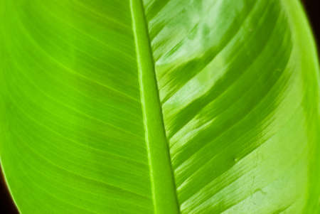 Texture of a green leaf as background Stock Photo - 8688352