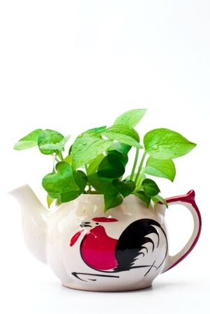 White teapot with leaves are green.