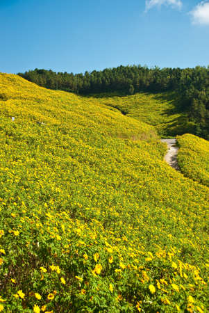 Yellow fields of flowers on the mountain.