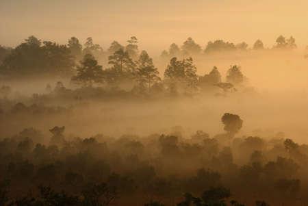 Fog in the morning at Tung Salang Luang Thailand
