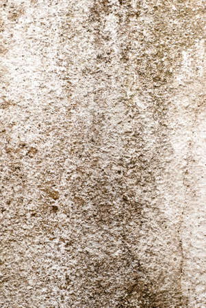 Concrete walls are moldy. Stock Photo