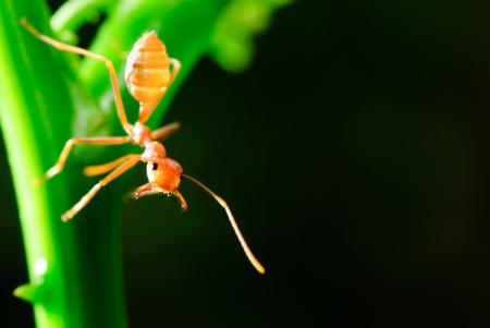 red ant in the nature Stock Photo - 17434489