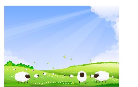 Sheep grazing in a green field.