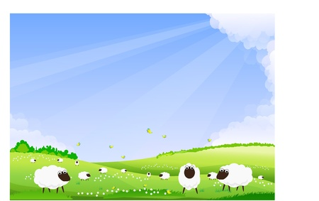 pastures: Sheep grazing in a green field.