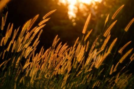 Flower grass being light evening. Stock Photo
