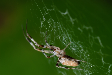 Spider waiting for prey.