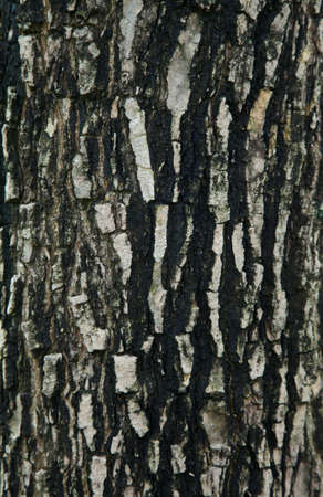 Natural bark of the tree in the park Stock Photo - 7202241