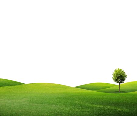 grass field: Green Tree isolated against a white background Stock Photo