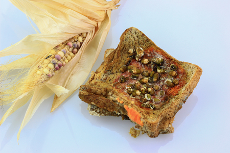 expire: bread expire and fungus,toxin on isolate background