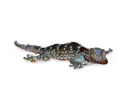 a little gecko slough off your skins for new skins and big body