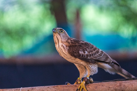 The hawks in training school for hunting birds  and protect factory and house from excrement is healthcare ,is business training
