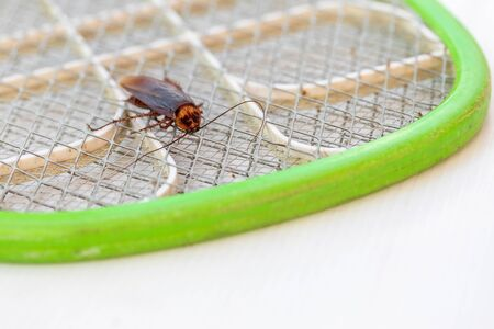 The cockroach is died on electronic mosquito swatter