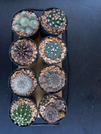 Many mini cactus in block plants for decoration and hobby / minimal style 版權商用圖片