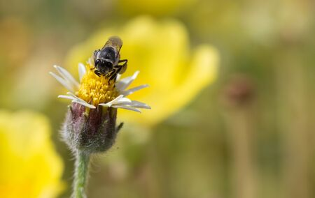 Bees find food on yellow flowers.
