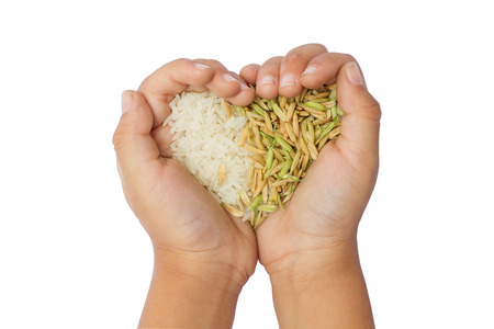 Rice in hand,rice is the most important economic crops in Thailand. Stock Photo