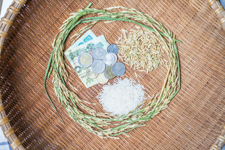 Rice, rice is the most important economic crops in Thailand. photo