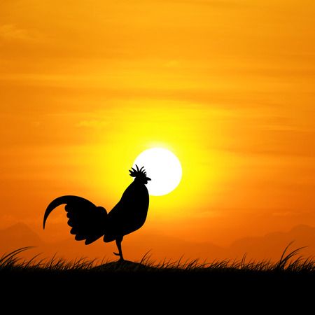 rooster at dawn: Silhouette of a rooster in the morning sun rising. Stock Photo