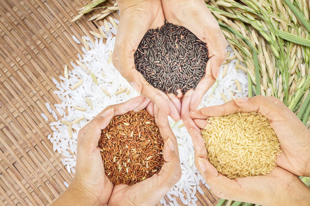 Black, brown and golden rice held in three hands over white rice background. Stock Photo