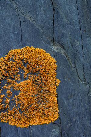 Orange lichen on a stone Stok Fotoğraf