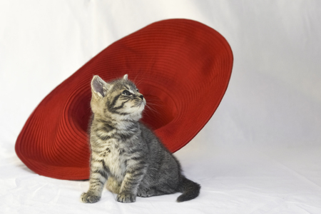 Gray kitten and red hat on a vague background.