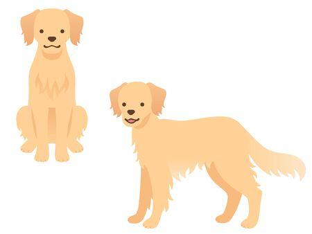 Illustration of Two Golden Retrievers (sitting in front, standing) Ilustração