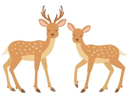 Illustration of stag and female deer