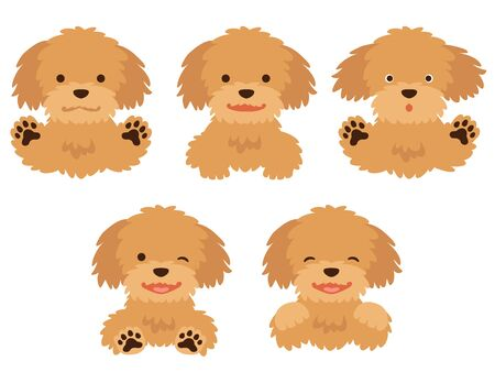 Illustration Set of Bust-Up Poodles with Various Facial Expressions